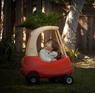 Find Your Perfect Tree - Fresh Christmas Tree Lots and Farms in the Monterey Bay, MontereyMommies.com
